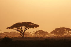 Kenya Landscape. At the sunset in Amboseli National Park Stock Photos