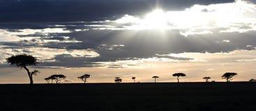 kenya mara masaisolnedgång Arkivfoto