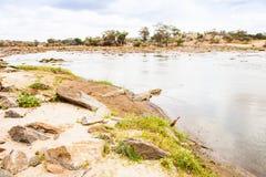 Crocodilos de Kenian Imagens de Stock Royalty Free