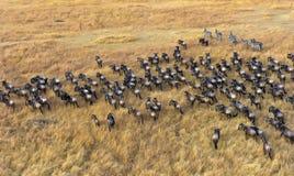 Kenya's Masai Mara game reserve Royalty Free Stock Image