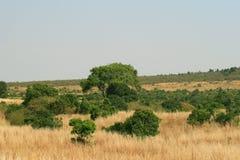Kenya's Masai Mara Great Plains Stock Image