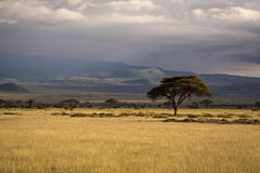 kenya savanna Royaltyfria Bilder
