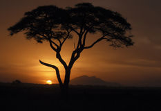 Kenya Sunset, Africa. Acacia tree silhouetted by the sunset in Amboseli National Park, Kenya, Africa royalty free stock image
