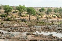 Kenya, Tsavo do leste - parque nacional e o rio fotos de stock