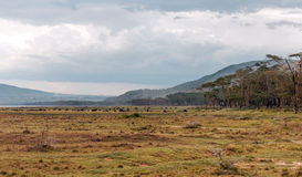 Kenya valley. With acacias on the African savannah on a cloudy day, with a lake one side royalty free stock photography