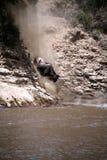 kenya wildebeest Royaltyfria Bilder