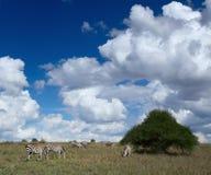 Kenya Stock Photography
