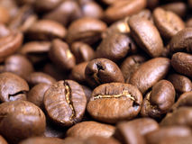Kenyan Coffee beans Royalty Free Stock Photos