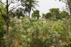 Kenyan Farm Houses Lizenzfreies Stockfoto