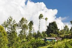 Kenyan Farm Houses Lizenzfreies Stockbild