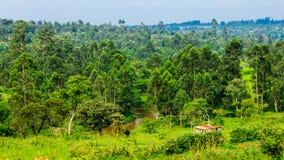 Kenyan Farm Landscape Imagenes de archivo