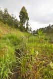 Kenyan Farm Landscape Lizenzfreie Stockbilder