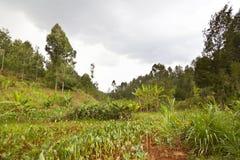 Kenyan Farm Landscape Stockfotografie