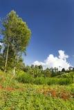 Kenyan Farm Landscape Stockfotos