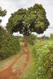 Kenyan Farm Landscape Royalty Free Stock Photo
