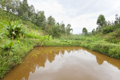 Kenyan Fish Pond Royalty Free Stock Image