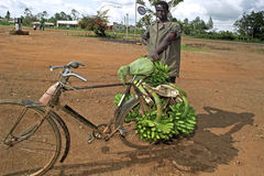 Kenyanmann, der Bananen auf Fahrrad transportiert Lizenzfreie Stockfotos