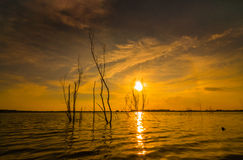 Kenyir sunset silhouette. Kenyir lake during sunset with a lot of stump royalty free stock photo