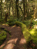Kepler track path Stock Photos