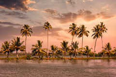 Kerala backwaters with palms on sunset Royalty Free Stock Photography