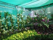 Kerala-Blumenschau Stockfotos