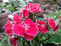 Kerala-Blumenschau Lizenzfreie Stockbilder