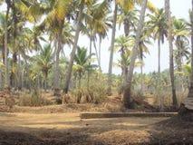 Kerala Côté de rivière photographie stock libre de droits