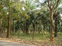 Kerala die Götter besitzen Land mit Naturen erfreuen 9 lizenzfreies stockfoto