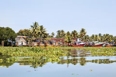Kerala fishing boats moored trapped by hyacinth Stock Photography