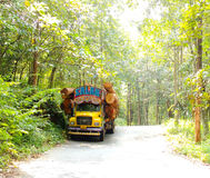 Kerala gods own country. Kerala forest located in konni reserve Stock Photo