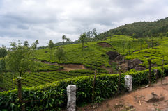 Kerala India travel background - panorama of green tea plantations Royalty Free Stock Images
