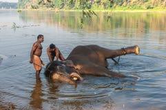 KERALA INDIEN - Januari, 12: Elefantbadning på Kodanad trainin Arkivbild