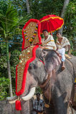 KERALA INDIEN - Januari, 17: Pooram tempelfestival på Januari, Royaltyfri Fotografi