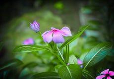 Kerala kwiat obrazy royalty free