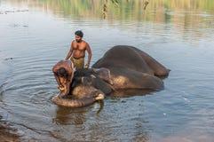 KERALA, la INDIA - enero, 12: Elefante que se baña en el trainin de Kodanad Imágenes de archivo libres de regalías