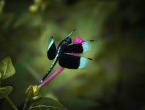 Kerala motyli obsiadanie na kwiacie fotografia stock