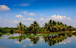 Kerala palm tree reflection. Lush palm trees  with blue sky and light cloud Kerala backwaters Royalty Free Stock Photo