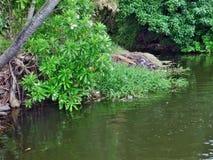 Kerala-Stauwasser Lizenzfreies Stockfoto