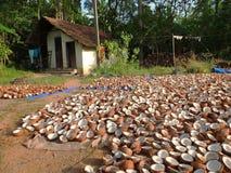 Kerala-Stauwasser, Indien Stockbild