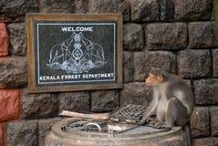 Kerala-Waldabteilung Stockbild