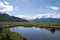 Keramiker Marsh Wildlife Refuge Anchorage Alaska arkivfoto