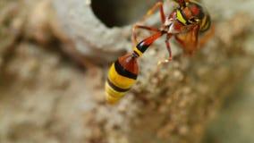 Keramikern Wasp som bygger det, är redeslutet upp detaljen HD lager videofilmer