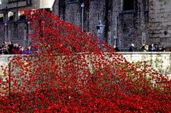 Keramische Mohnblumen, in der Erinnerung des Ersten Weltkrieges Stockbild
