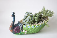 Keramischer Blumentopf in Form eines Pfaus Stockfoto