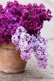 Keramischer Topf mit einer Niederlassung der lila Blume Lizenzfreie Stockbilder