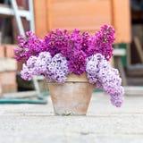 Keramischer Topf mit einer Niederlassung der lila Blume Lizenzfreies Stockbild