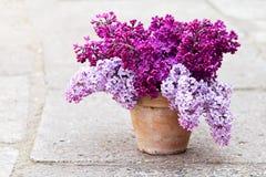 Keramischer Topf mit einer Niederlassung der lila Blume Stockfotografie