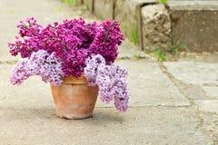 Keramischer Topf mit einer Niederlassung der lila Blume Stockbild