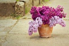 Keramischer Topf mit einer Niederlassung der lila Blume Stockfotos