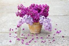 Keramischer Topf mit einer Niederlassung der lila Blume Lizenzfreies Stockfoto